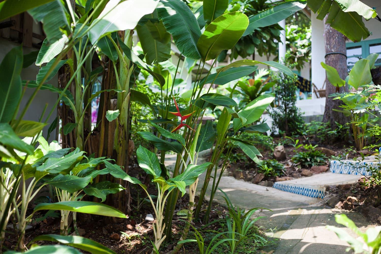 Indie Beach Koh Chang Plants